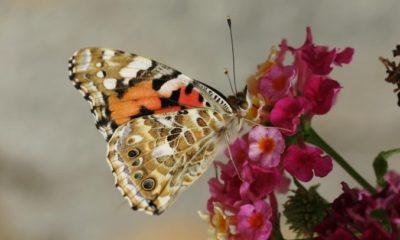 EU Plans to Raise €20bn a Year to Protect Biodiversity